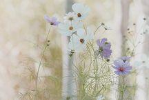 Květy, květiny, kytice ...