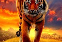 Tiger teininger