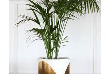 pot plant decorating