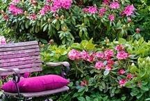 Garden: Rhododendrons and Camellias