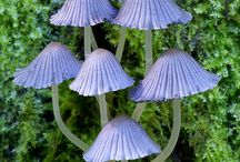 Magical Mushrooms ♥