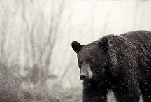 my sweet bear.