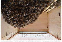 Warré / ruche Warré - Warré hive - Warré Beute