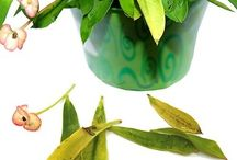Husplanter - behandling