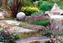 Going Native in My Garden / A collection of drought tolerant gardens that still look lush and colorful using drought tolerant and native California plants.  / by Paper Dragon Art