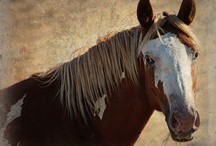 Wild Horses in Oregon