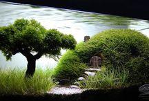 Aquarium / Under water world