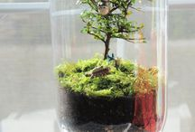Indoor Gardening / by Laura Ramon