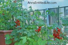 piera / Orto  e giardinaggio