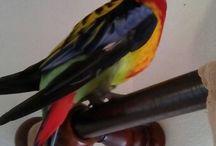 Rosella parrot / Birds Rosella parrot