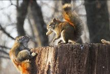 Wildlife Garden / by Allison Lovell