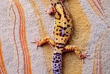 lizards and critters / by Julie Steele