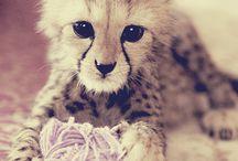 Animal friends / by Emilia Lundquist