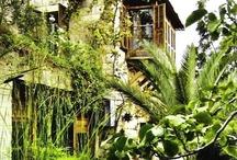 Tropical • Landscape Design
