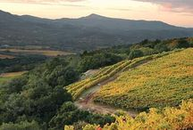 Sonoma Wine Country - Home.