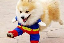 Halloween Costumes for Dogs!