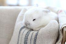 Bunny Love / The cuteness of Olivia's kind :) / by Karen Kobylka
