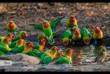 furcs madarak