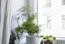 GREEN HOMES. / Make your home a healthy, green place and get inspried by these lovely botanical homes.