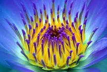 flowers / by Annie Hammer