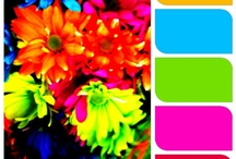 My Color Palette by 3ichael 7ambert
