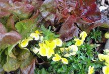 Gardening Ideas / by Miss Joys Ornaments