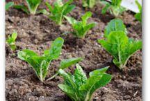 Gardening-How To Grow Plants