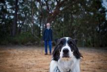 Pet photos / by Jeni Dwyer
