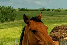 Konie/ Horse