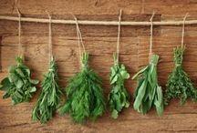 fun 4 mama: Garden/Plants