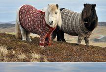 Pony truien