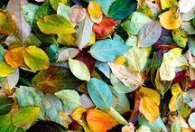 Leaves / Leaves