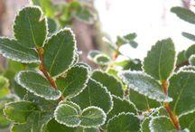 De todo un poco! / Me encantan las plantas y pensando en espacios pequeños hice algunas composiciones con cactus y suculentas :)