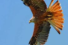 Beautiful wing span