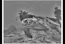 Deniz Kaplumbağaları : gencerozdemir.com