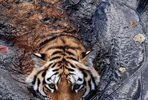 Wild animals / by Rene' Sewell