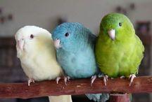 Birds / Birds, mostly parrots, cages, toys, nutritious parrot foods etc.