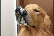 câini și papagali