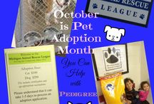 Pet Adoption Month #PedigreeGives