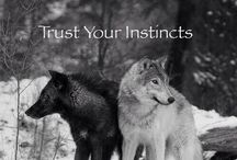 ♡ Wolves!