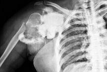 OrthoRadiology