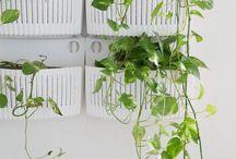 Green plants@home