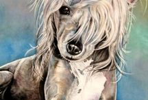The Chinese Crested Hairless