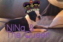 NiNa & The Queen - NiNa The Dog Series