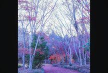 とっておきの紅葉スポット。 今年はこれ超えを目指します。 Here is my favorite place for shooting autumn leaves. #autumn #autumnleaves #favoriteplace #紅葉 #とっておきの場所写真
