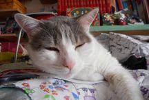 que faire de tous ces tissus ? / Mon chat Roméo s'en sert de nid douillet et moi, je les découpe, les assemble...