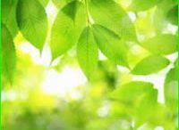 Photosynthesis MCQs