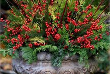 Christmas gardening / Planting and decoration ideas for Christmas