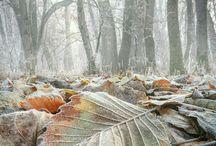 2017 Autumn November