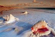 Ocean / by Tawnya Brooks